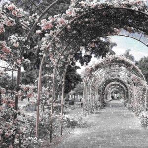 SakuraSingapore